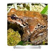 Knudsen Thin Toed Frog Shower Curtain