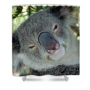 Koala Face Shower Curtain