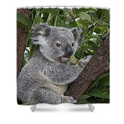 Koala Joey Australia Shower Curtain
