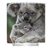Koala Mother Holding Joey Australia Shower Curtain