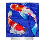 Kohaku Koi In Deep Blue Pool Shower Curtain