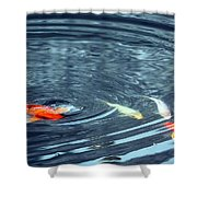 Koi And Sky Reflection Shower Curtain
