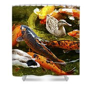 Koi Fish In Pond Swimming With Two Mallard Ducks Shower Curtain