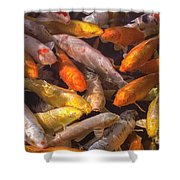 Koi Fish Nishikigoi  Shower Curtain