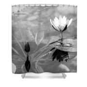 Koi Pond With Lily Pad Flower And Bud Black And White Shower Curtain