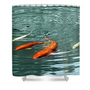 Koi With Sky Reflection Shower Curtain