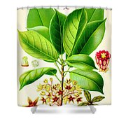 Kola Nut Shower Curtain