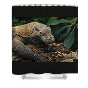 Komodo-7393 Shower Curtain