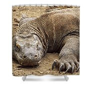 Komodo Dragon Male Basking Komodo Island Shower Curtain