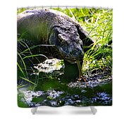 Komodo Island 1 Shower Curtain
