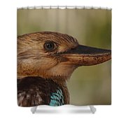 Kookaburra Portrait Shower Curtain