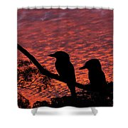 Kookaburras At Sunset Shower Curtain