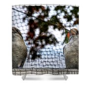 Kookaburra's On Guard At The Buffalo Zoo Shower Curtain