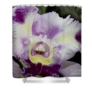 Kristi Leigh Shower Curtain