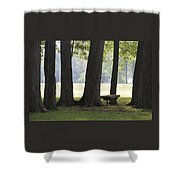 Ksu Ashtabula Campus Park Shower Curtain