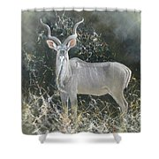 Kudu Bull Shower Curtain