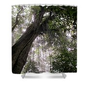La Tigra Rainforest Canopy Shower Curtain