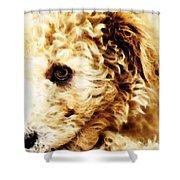 Labradoodle Dog Art - Sharon Cummings Shower Curtain