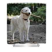 Labradoodle Holding Stick Shower Curtain