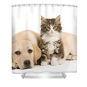 Labrador And Forest Cat Shower Curtain by Jean-Michel Labat