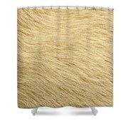 Labrador Coat Shower Curtain
