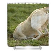 Labrador In Hole Shower Curtain