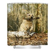 Labrador Jumping With Stick Shower Curtain