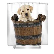 Labrador Puppy In Bucket Shower Curtain
