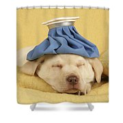 Labrador Puppy With Ice Pack Shower Curtain