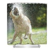 Labrador Retriever And Hose Shower Curtain