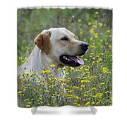 Labrador Retriever Dog Shower Curtain