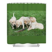 Labrador Retriever Puppies And Feather Shower Curtain