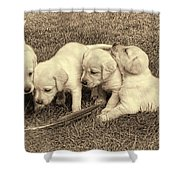 Labrador Retriever Puppies And Feather Vintage Shower Curtain