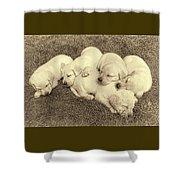 Labrador Retriever Puppies Nap Time Vintage Shower Curtain by Jennie Marie Schell