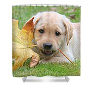 Labrador Retriever Puppy With Autumn Leaf Shower Curtain