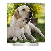 Labrador With Puppy Shower Curtain