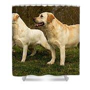 Labradors Shower Curtain