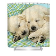 Labs Sleeping On A Blanket Shower Curtain by Greg Cuddiford
