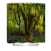 Laburnum Tree In Bloom Shower Curtain