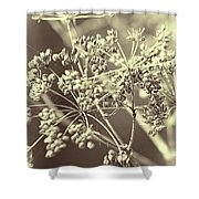 Lace 2 Shower Curtain