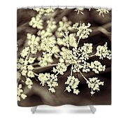 Lace 3 Shower Curtain