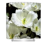 Lace Palm Springs Shower Curtain