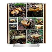 Lactarius Torminosus - Yellow Mushrooms Shower Curtain