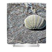 Lacy Shell On A Beachrock Shower Curtain