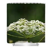 Lacy White Shower Curtain