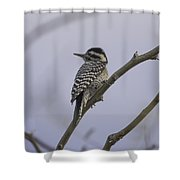 Ladder-backed Perch Shower Curtain