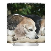 Lady 18 Shower Curtain