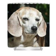 Lady 19  Shower Curtain