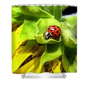 Ladybug And Sunflower Shower Curtain