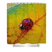 Lady Bug 3 Shower Curtain